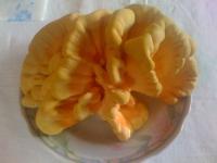 "carob mushroom ""laetiporus sulphureus"""